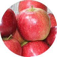 Godiva Apple